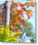Changing Leaves Metal Print