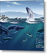 Channel Islands Whales Metal Print