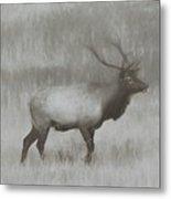 Charcoal Bull Elk In Field Metal Print
