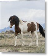 Charger Metal Print by Nicole Markmann Nelson