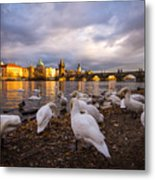 Charles Bridge, Prague With Swans Metal Print