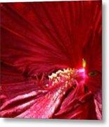 Charlotte Beach Red Hibiscus Metal Print