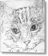 Chat Somnolant Resting Cat Metal Print
