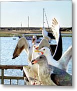 Chatty Seagull Birds Metal Print