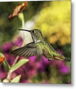 Check Out That Zinnia Metal Print