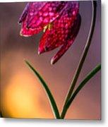 Checkered Lily Metal Print