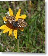 Checkerspot On Bahai Aster 1 Metal Print
