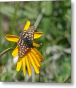 Checkerspot On Bahai Aster 3 Metal Print