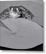 Checking It Out Metal Print