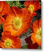 Cheerful Orange Flowers  Metal Print