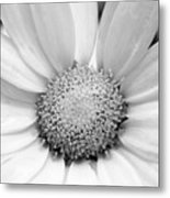 Cheery Daisy - Black And White Metal Print