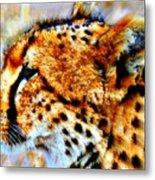 Cheetah IIi Metal Print