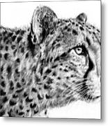 Cheetah  Metal Print