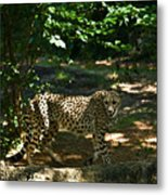 Cheetah On The In The Forest 2 Metal Print