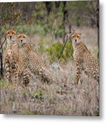 Cheetah Party I Metal Print