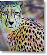 Cheetah Viii Metal Print