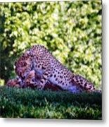 Cheetahs In Love Metal Print