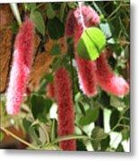 Chenille Caterpillar Plant Metal Print