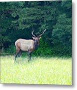 Cherokee Elk Metal Print