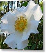 Cherokee Rose 1 Metal Print