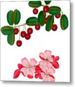 Cherries And Cherry Blossoms Metal Print