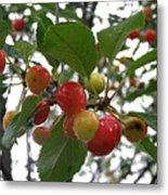 Cherries In The Morning Rain Metal Print