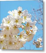 Cherry Blossom And A Bee Metal Print