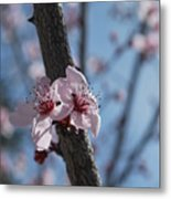 Cherry Blossom Branch Metal Print