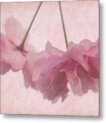 Cherry Blossom Froth Metal Print