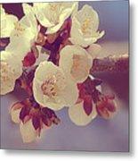 Apricot Blossom II Metal Print