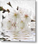 Cherry Blossom In Water Metal Print by Elena Elisseeva