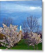 Cherry Blossom Liberatum Metal Print