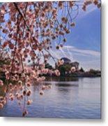 Cherry Blossom Over Tidal Basin Metal Print