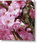 Cherry Blossom Tree Metal Print