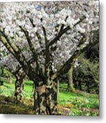 Cherry Blossom Tree Metal Print by Pierre Leclerc Photography