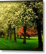 Cherry Blossom Trees Metal Print