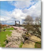 Cherry Blossom Trees At Portland Waterfront Metal Print