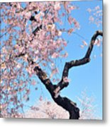 Cherry Blossom Trilogy II Metal Print