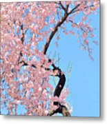 Cherry Blossom Trilogy IIi Metal Print