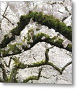Cherry Blossoms 104 Metal Print