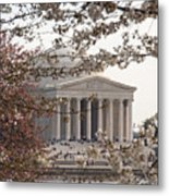 Cherry Blossoms And The Jefferson Memorial Metal Print