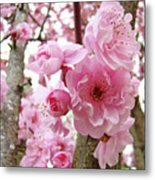 Cherry Blossoms Art Prints 12 Cherry Tree Blossoms Artwork Nature Art Spring Metal Print