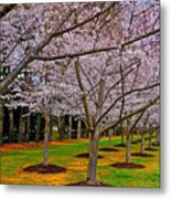 Cherry Blossoms At The Beach Metal Print
