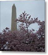 Cherry Blossoms At The Washington Monument Metal Print