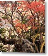 Cherry Blossoms II Metal Print