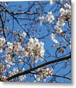 Cherry Blossoms In Hiroshima Metal Print