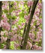 Cherry Blossoms In Spring, Milan, Italy Metal Print