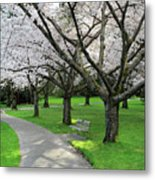 Cherry Blossoms In Stanley Park Vancouver Metal Print