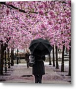 Cherry Blossoms In The Rain Metal Print