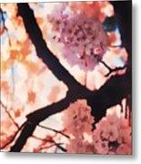 Cherry Blossoms In Washington D.c. Metal Print